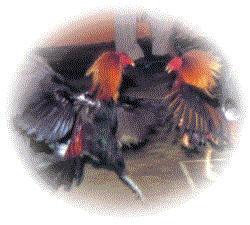 La batalla del palenque